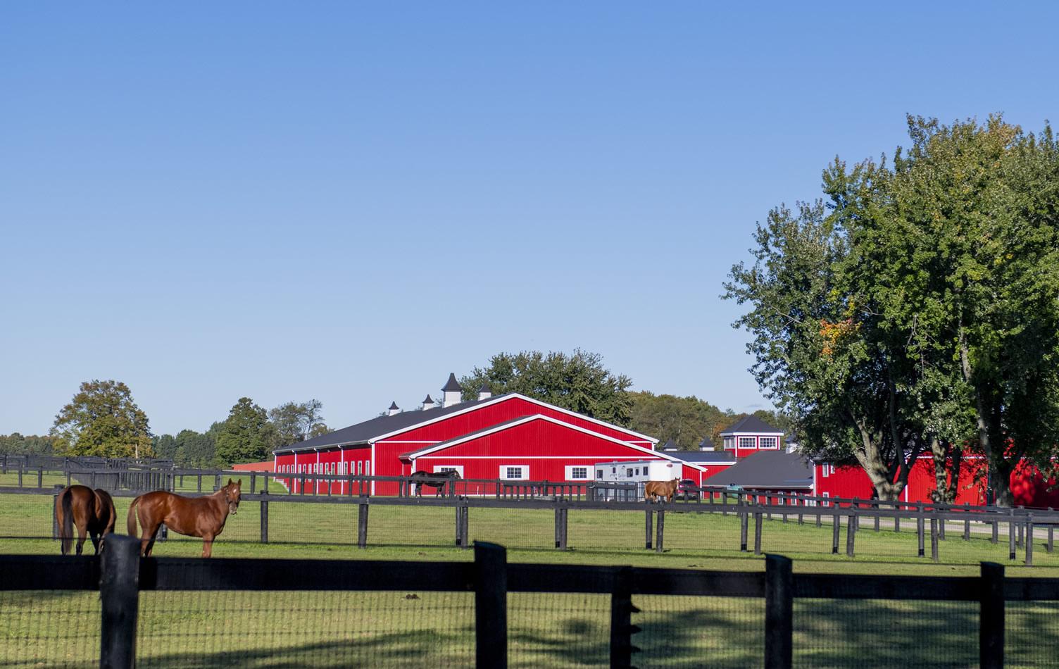 camhaven farm barn with horses caledon on